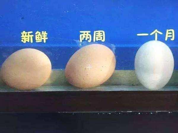 生活小帮手 教你如何鉴别鸡蛋新不新鲜 妙招集合